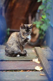 Kitten sitting on wooden boards. A small mottled kitten sitting on a old wooden boards in the garden Stock Photos
