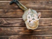 Kitten sitting on wooden floor. royalty free stock photography