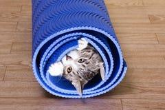 Kitten sitting on a yoga mat. stock photography