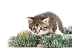 Kitten skulking through christmas tree decoration Stock Photography
