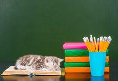 kitten sleep on the books near empty green chalkboard Royalty Free Stock Photography