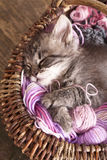 Kitten sleeping Stock Images