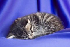 Kitten Sleeping. A kitten naps on blue fabric Stock Photos