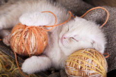 Kitten  sleeping with a ball of wool Royalty Free Stock Photo