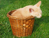 Kitten sleeping in basket Royalty Free Stock Photo