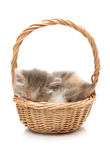 Kitten sleeping in basket Stock Photography
