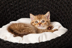 Kitten sleeping in the basket Stock Photography