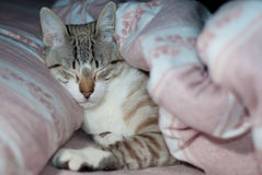 Kitten sleeping in bed Royalty Free Stock Photo