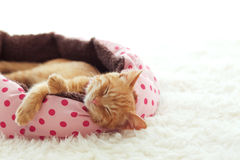 Kitten sleeping in the bed Royalty Free Stock Photography