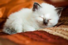 Kitten sleeping on bed Stock Photos