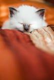 Kitten sleeping on bed Stock Photo