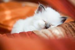 Kitten sleeping on bed Royalty Free Stock Photos