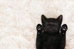 Kitten sleeping on carpet Stock Photography