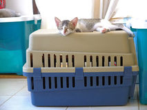 Kitten sleeping on cat carrier Stock Image