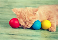 Kitten sleeping on colored easter eggs Royalty Free Stock Photos