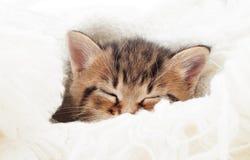 kitten sleeping Royalty Free Stock Image