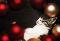 Kitten Sleeping In Decorations Royalty Free Stock Images