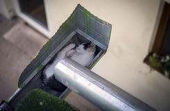 Kitten sleeping in the eaves. Of the house Royalty Free Stock Image