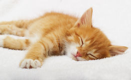 Kitten sleeping Royalty Free Stock Photography