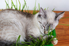 Kitten sleeping in grass Royalty Free Stock Photos
