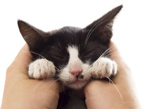 Kitten sleeping Royalty Free Stock Images