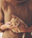 Kitten sleeping on hands Royalty Free Stock Image