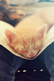 Kitten. Sleeping after hard day Royalty Free Stock Image