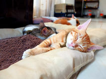 Kitten sleeping at home Royalty Free Stock Photography