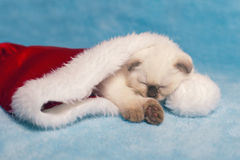 Kitten sleeping inside Santa's hat Royalty Free Stock Images