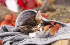 Kitten is sleeping Stock Image