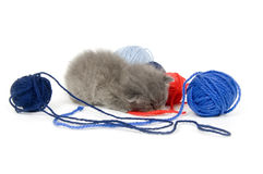 Kitten sleeping next yarn Stock Images