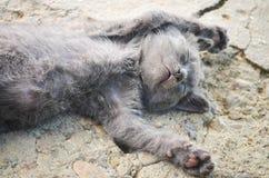 Kitten sleeping outdoor Stock Photography