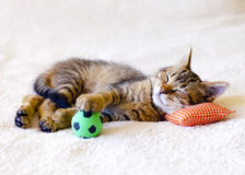Kitten sleeping on a pillow. With a soccer ball Royalty Free Stock Photo