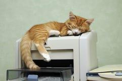 Kitten sleeping on the printer Royalty Free Stock Image