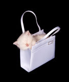 Kitten sleeping in purse Stock Photos