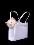 Kitten sleeping in purse Stock Images