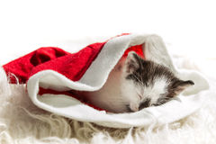 Kitten sleeping in a Santa Claus hat Stock Photos