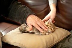 Kitten sleeping in a sofa Stock Photo