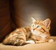 Kitten sleeping in a sofa Stock Image