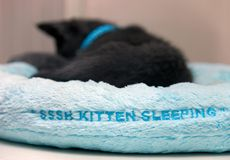 Kitten sleeping in a soft blue bed. Adorable young kitten taking a cat-nap on a blue bed with the tagline sssh kitten sleeping Stock Images
