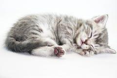 Kitten is sleeping sweetly. The kitten lies Stock Photos