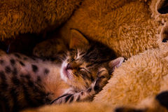 Kitten sleeping royalty free stock photos