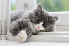 Kitten sleeping on window ledge Stock Photos