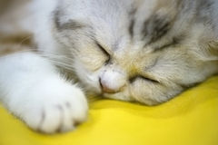 Kitten sleeping on yellow Stock Photos