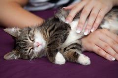 Kitten sleeps Stock Images