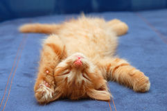 Kitten sleeps on the back Stock Images