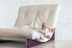 Kitten sleeps on soft couch royalty free stock photography