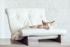 Kitten sleeps on soft couch stock images