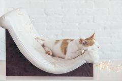 Kitten sleeps on soft couch royalty free stock photos