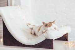 Kitten sleeps on soft couch stock photo